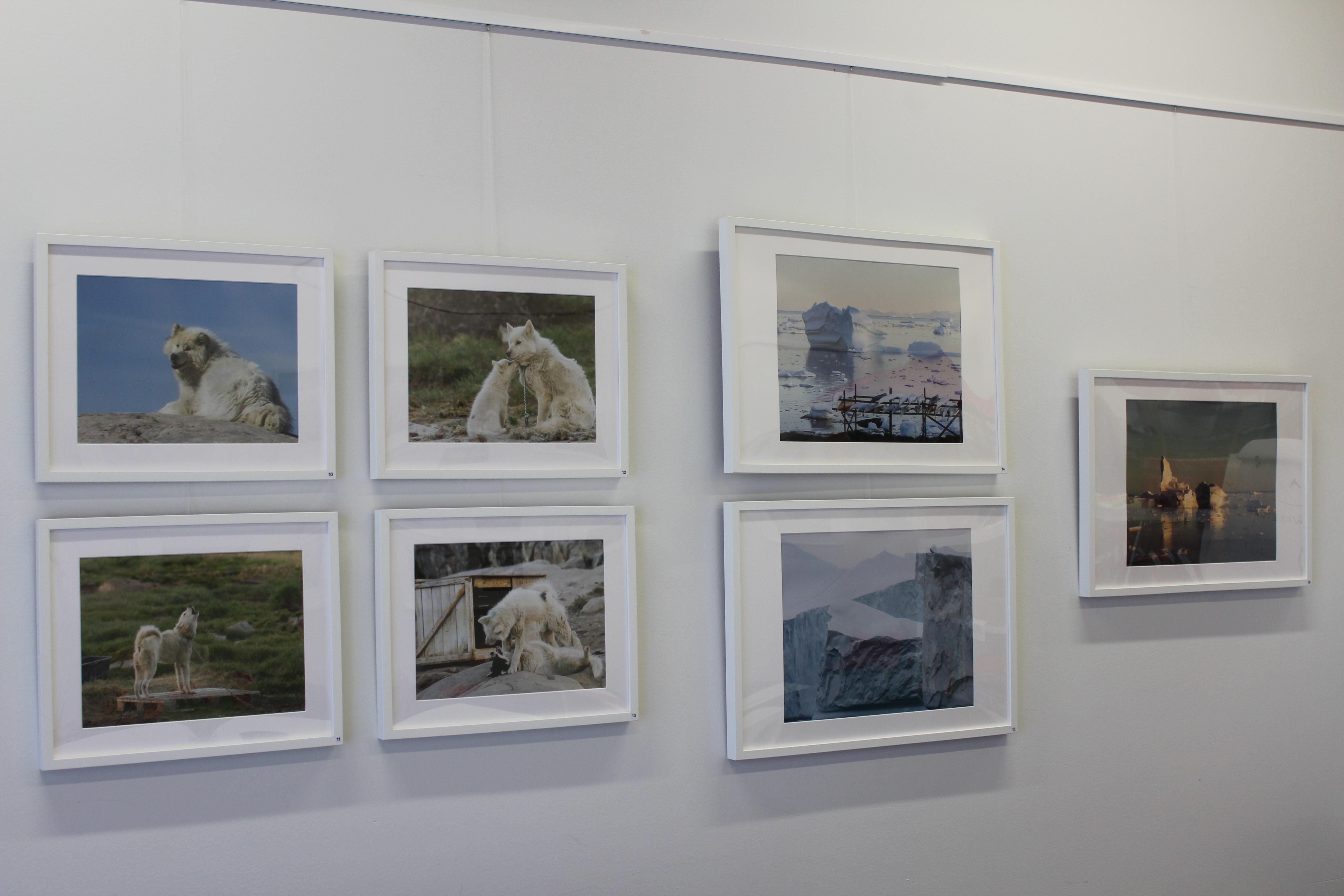 Slädhundar och isberg fångade i fotografier
